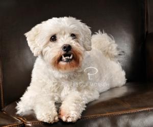 Dog portraits Milwaukee